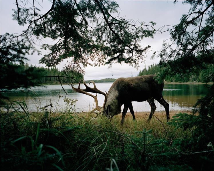slate-island-caribou2