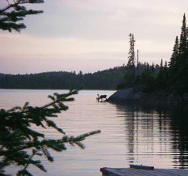 slate-island-caribou4