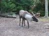 slate-island-caribou3